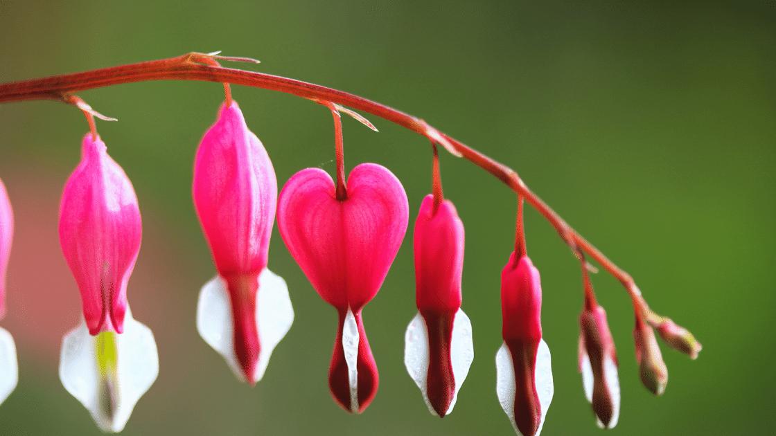 Foto Profil bunga Keren terbaru
